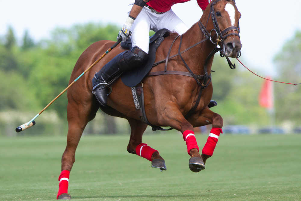 Carreras de caballos: preparación y equipo necesario
